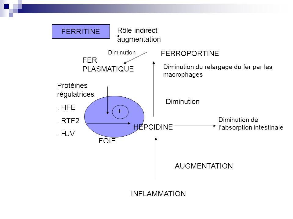 FOIE HEPCIDINE Protéines régulatrices. HFE. RTF2. HJV FER PLASMATIQUE FERRITINE FERROPORTINE + Diminution Diminution du relargage du fer par les macro