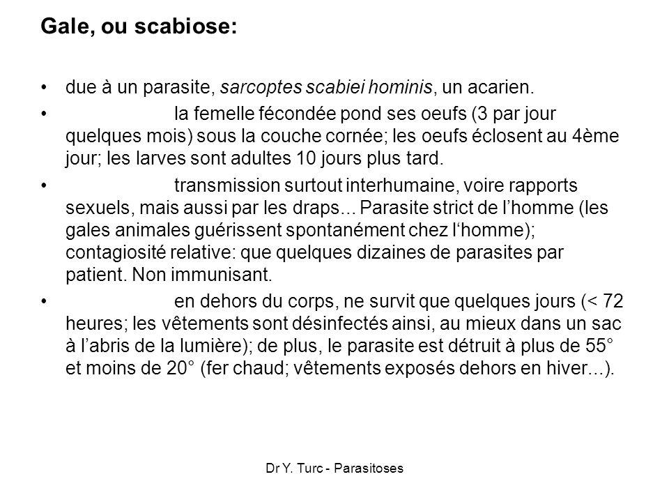 Dr Y. Turc - Parasitoses Gale, ou scabiose: due à un parasite, sarcoptes scabiei hominis, un acarien. la femelle fécondée pond ses oeufs (3 par jour q