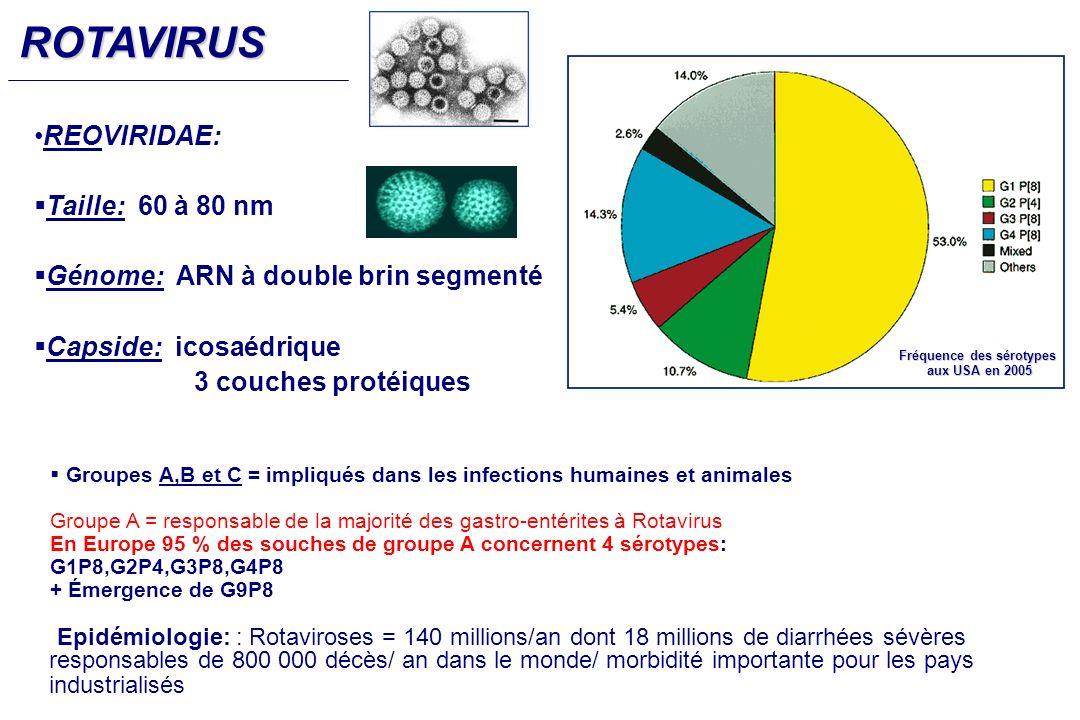 Groupes A,B et C = impliqués dans les infections humaines et animales Groupe A = responsable de la majorité des gastro-entérites à Rotavirus En Europe