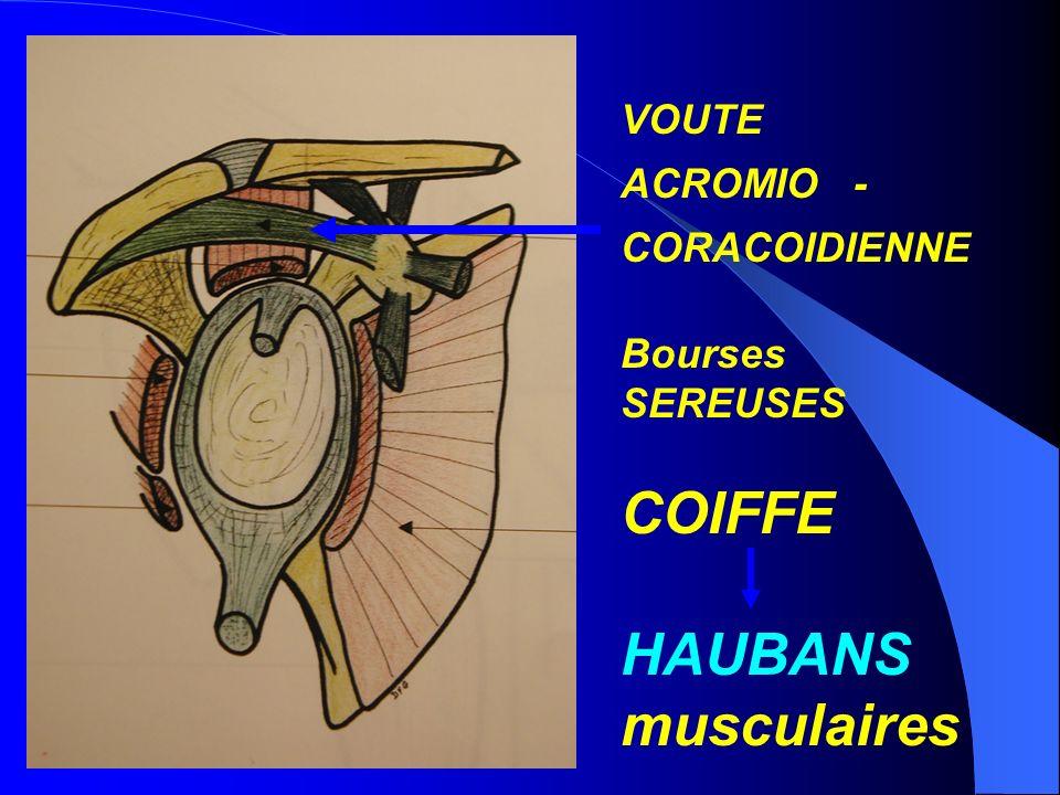 VOUTE ACROMIO - CORACOIDIENNE Bourses SEREUSES COIFFE HAUBANS musculaires