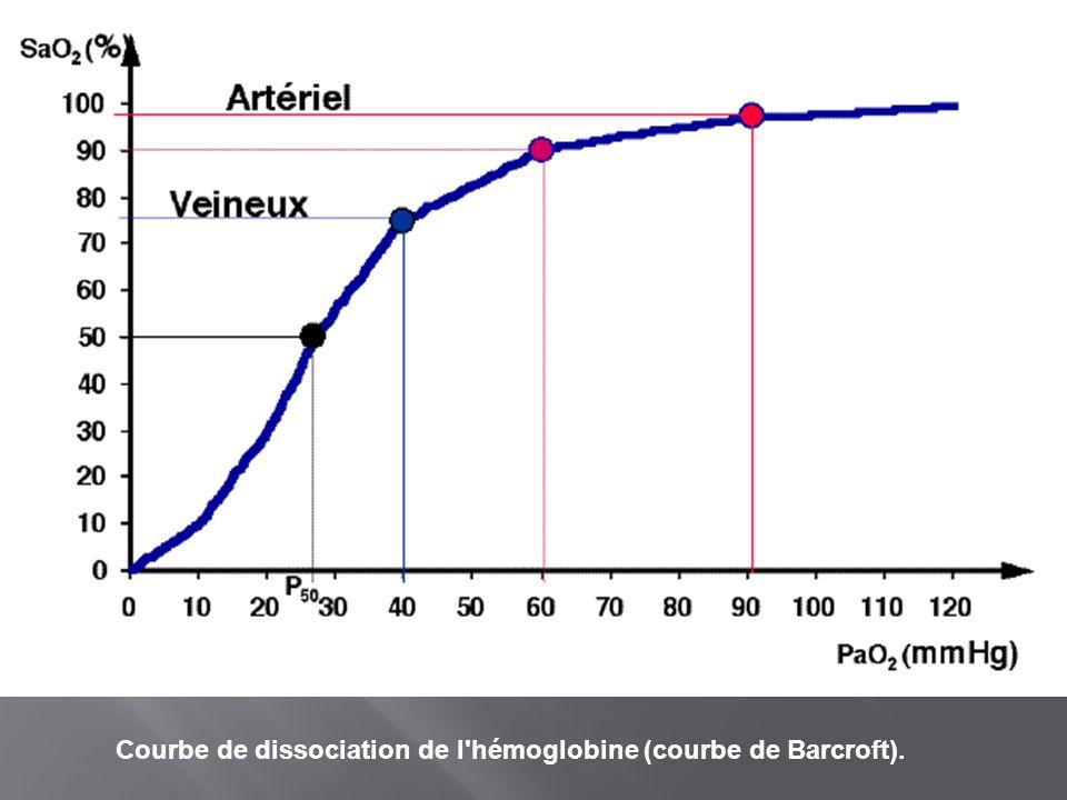 Courbe de dissociation de l hémoglobine (courbe de Barcroft).