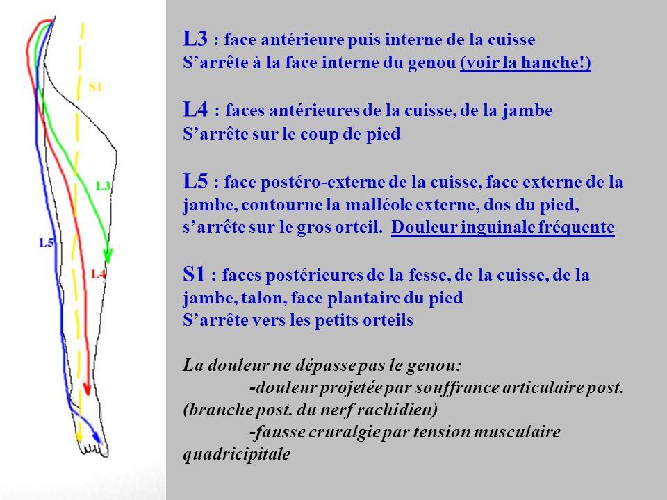 L3 : face antérieure puis interne de la cuisse Sarrête à la face interne du genou (voir la hanche!) L4 : faces antérieures de la cuisse, de la jambe S