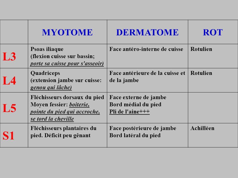 MYOTOMEDERMATOMEROT L3 Psoas iliaque (flexion cuisse sur bassin; porte sa cuisse pour s'asseoir) Face antéro-interne de cuisseRotulien L4 Quadriceps (