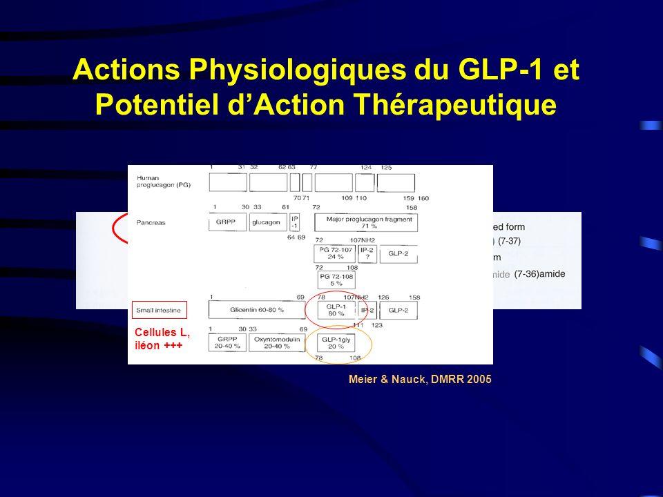 Actions Physiologiques du GLP-1 et Potentiel dAction Thérapeutique Meier & Nauck, DMRR 2005 Cellules L, iléon +++