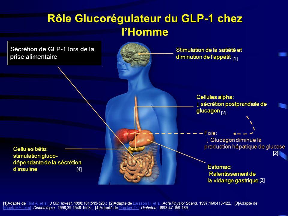 Rôle Glucorégulateur du GLP-1 chez lHomme Stimulation de la satiété et diminution de lappétit Cellules bêta: stimulation gluco- dépendante de la sécrétion dinsuline [1]Adapté de Flint A, et al.