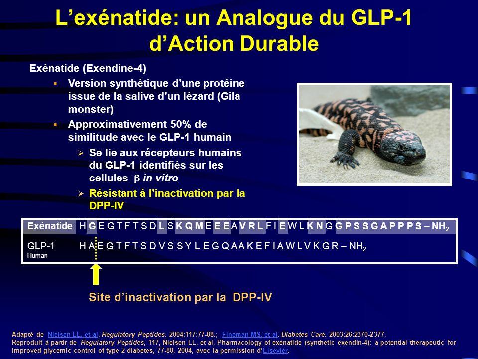 Exénatide (Exendine-4) Version synthétique dune protéine issue de la salive dun lézard (Gila monster) Approximativement 50% de similitude avec le GLP-1 humain Se lie aux récepteurs humains du GLP-1 identifiés sur les cellules in vitro Résistant à linactivation par la DPP-IV Lexénatide: un Analogue du GLP-1 dAction Durable Adapté de Nielsen LL, et al.