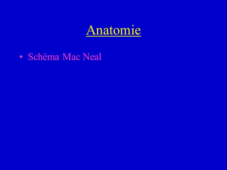 Anatomie Schéma Mac Neal