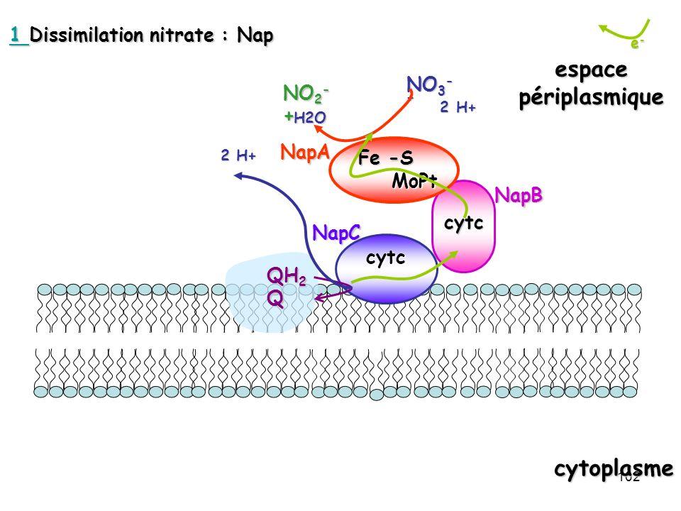 102 e-e-e-e- cytoplasme espacepériplasmique cytc 2 H+ 2 H+ NO 3 - +H2O NO 2 - + QH 2 Q 2 H+ cytc MoPt MoPt Fe -S NapB NapCNapA 1 1 Dissimilation nitra