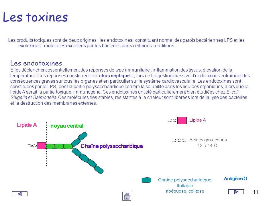 11 Les toxines Les produits toxiques sont de deux origines : les endotoxines : constituant normal des parois bactériennes LPS et les exotoxines : molé