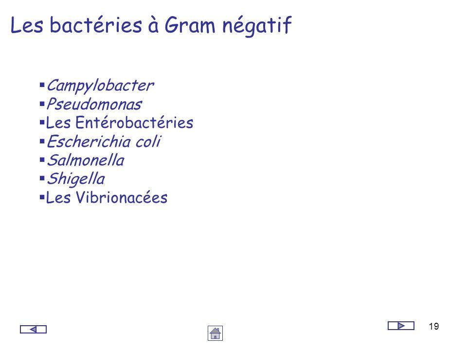 19 Les bactéries à Gram négatif Campylobacter Pseudomonas Les Entérobactéries Escherichia coli Salmonella Shigella Les Vibrionacées