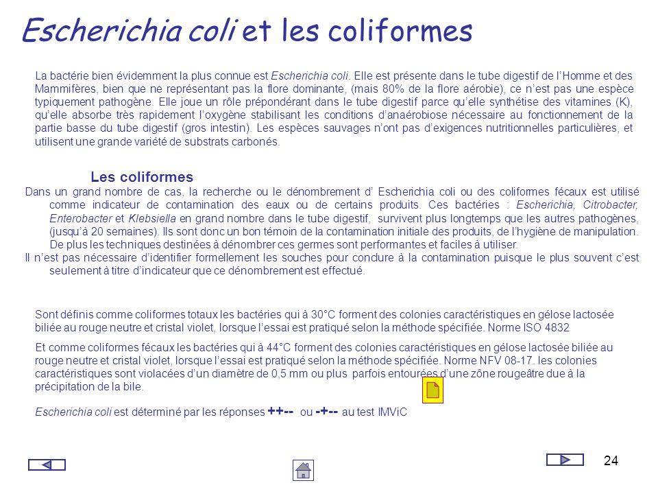 24 Escherichia coli et les coliformes La bactérie bien évidemment la plus connue est Escherichia coli. Elle est présente dans le tube digestif de lHom