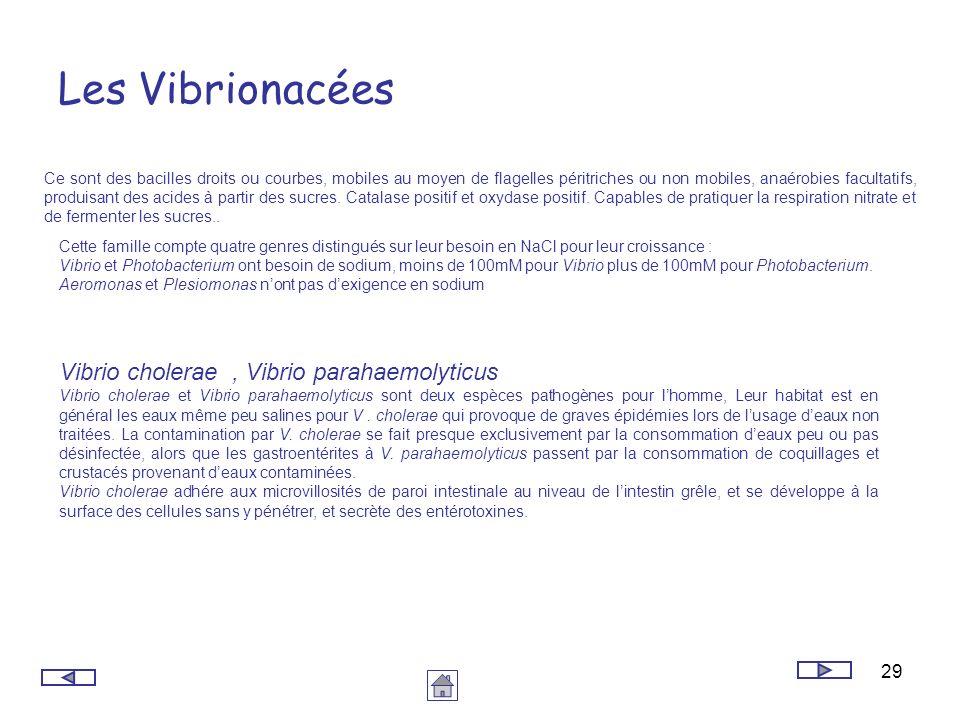 29 Les Vibrionacées Ce sont des bacilles droits ou courbes, mobiles au moyen de flagelles péritriches ou non mobiles, anaérobies facultatifs, produisa
