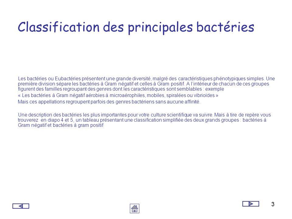 3 Classification des principales bactéries Les bactéries ou Eubactéries présentent une grande diversité, malgré des caractéristiques phénotypiques sim