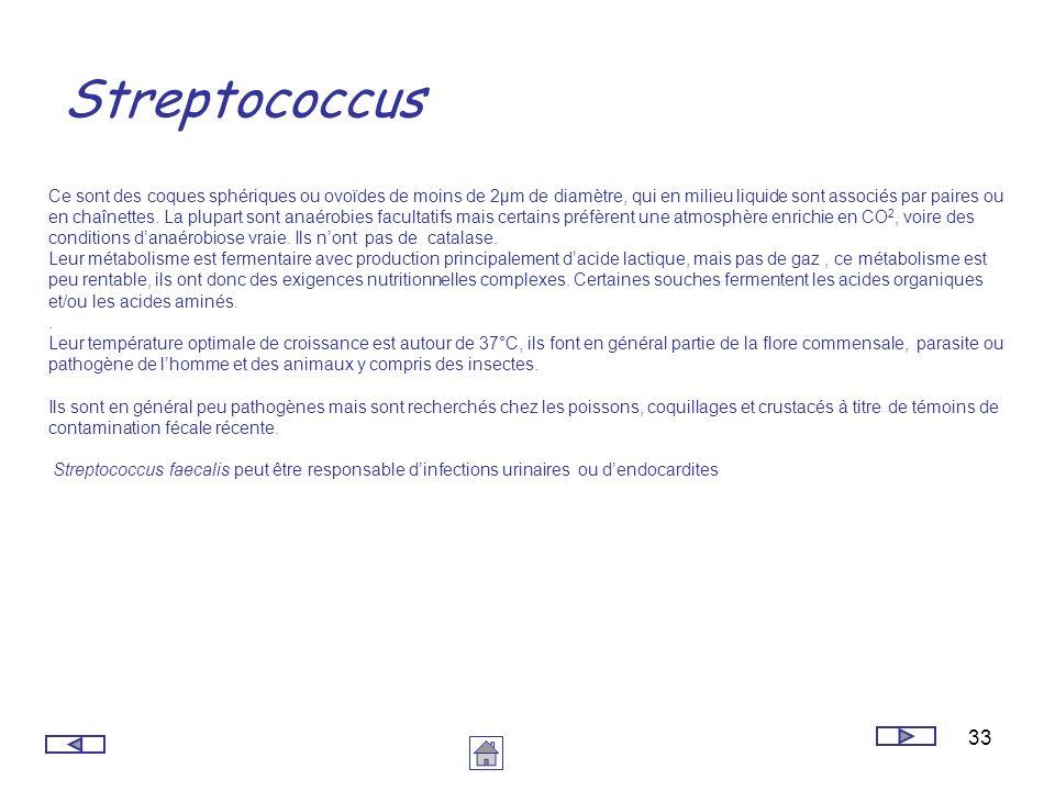 33 Streptococcus Ce sont des coques sphériques ou ovoïdes de moins de 2µm de diamètre, qui en milieu liquide sont associés par paires ou en chaînettes
