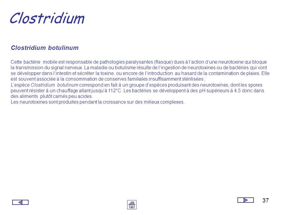 37 Clostridium Clostridium botulinum Cette bactérie mobile est responsable de pathologies paralysantes (flasque) dues à laction dune neurotoxine qui b
