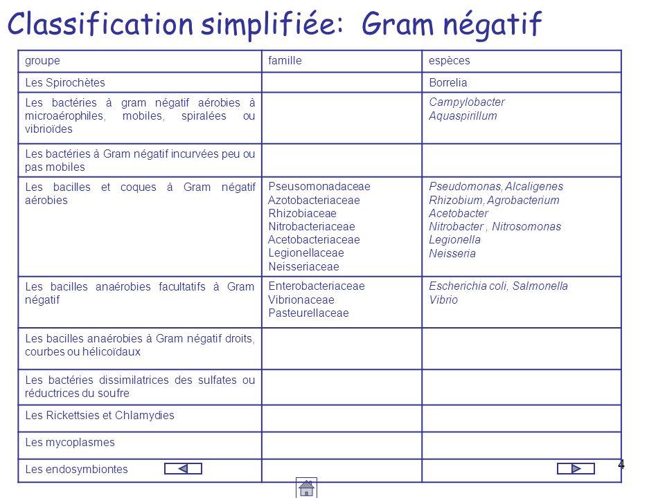4 Classification simplifiée: Gram négatif groupefamilleespèces Les SpirochètesBorrelia Les bactéries à gram négatif aérobies à microaérophiles, mobile