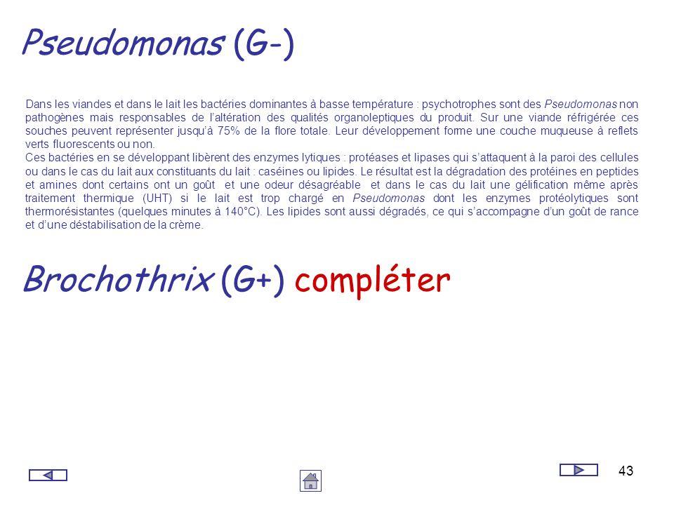 43 Pseudomonas (G-) Dans les viandes et dans le lait les bactéries dominantes à basse température : psychotrophes sont des Pseudomonas non pathogènes