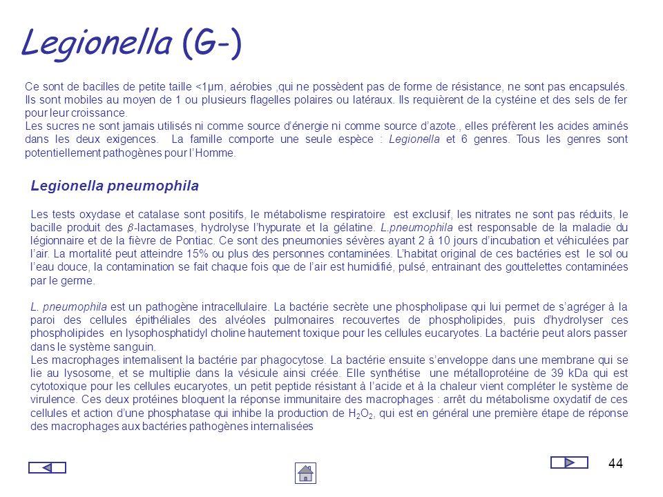 44 Legionella (G-) Ce sont de bacilles de petite taille <1µm, aérobies,qui ne possèdent pas de forme de résistance, ne sont pas encapsulés. Ils sont m