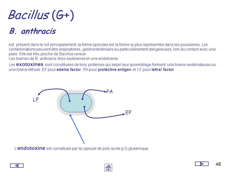 46 Bacillus (G+) B. anthracis est présent dans le sol principalement, la forme sporulée est la forme la plus représentée dans les poussières. Les cont