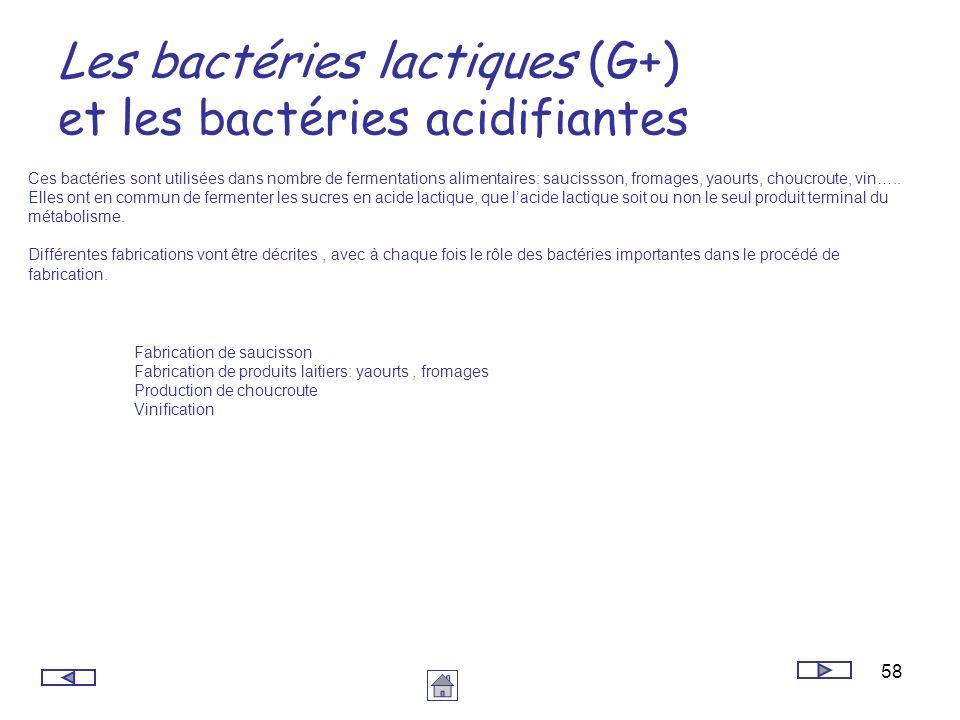 58 Les bactéries lactiques (G+) et les bactéries acidifiantes Ces bactéries sont utilisées dans nombre de fermentations alimentaires: saucissson, from