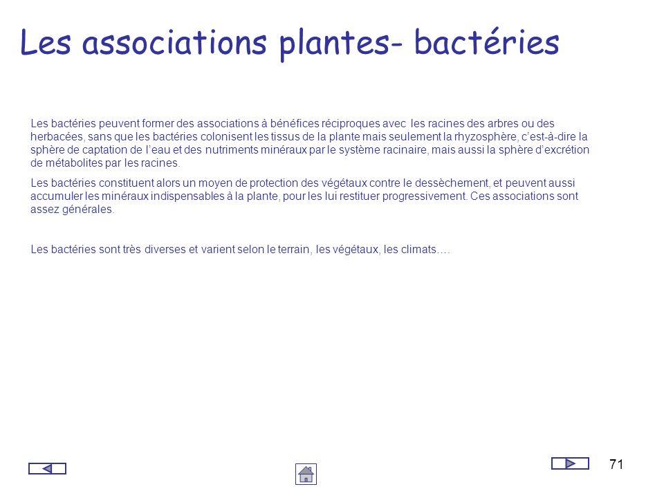 71 Les associations plantes- bactéries Les bactéries peuvent former des associations à bénéfices réciproques avec les racines des arbres ou des herbac