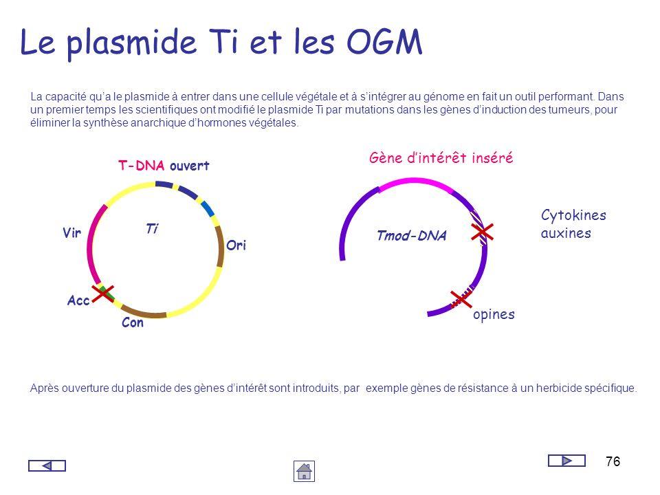 76 Le plasmide Ti et les OGM La capacité qua le plasmide à entrer dans une cellule végétale et à sintégrer au génome en fait un outil performant. Dans