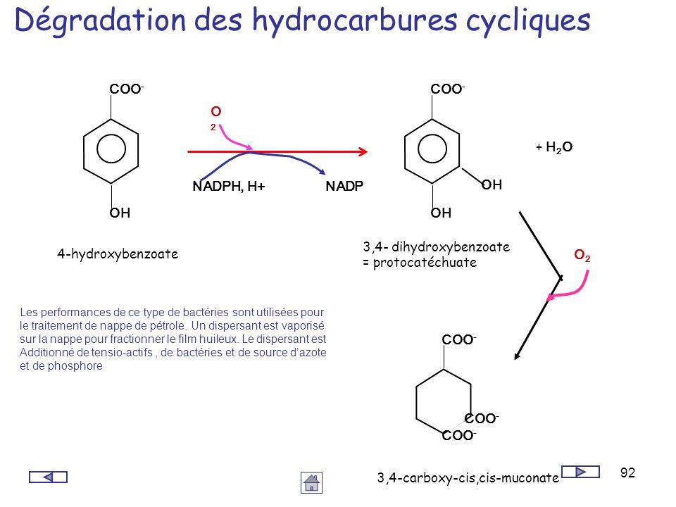92 Dégradation des hydrocarbures cycliques Les performances de ce type de bactéries sont utilisées pour le traitement de nappe de pétrole. Un dispersa