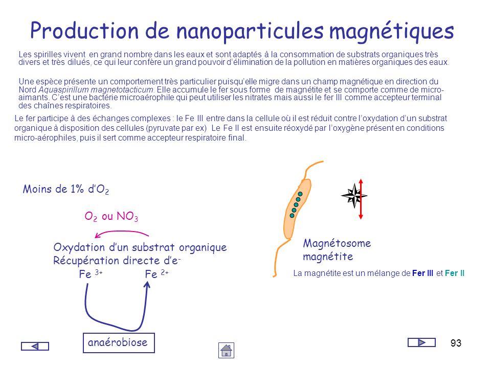 93 Production de nanoparticules magnétiques Les spirilles vivent en grand nombre dans les eaux et sont adaptés à la consommation de substrats organiqu