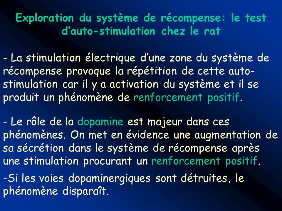 Exploration du système de récompense: le test dauto-stimulation chez le rat - La stimulation électrique dune zone du système de récompense provoque la
