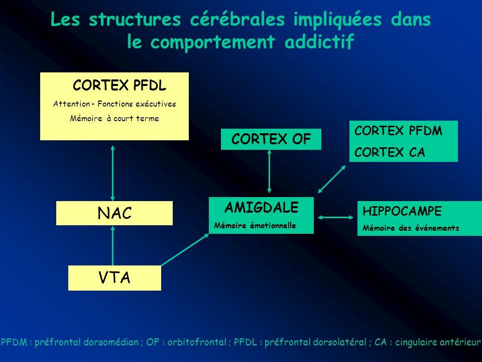 Les structures cérébrales impliquées dans le comportement addictif AMIGDALE Mémoire émotionnelle VTA NAC CORTEX PFDL Attention - Fonctions exécutives