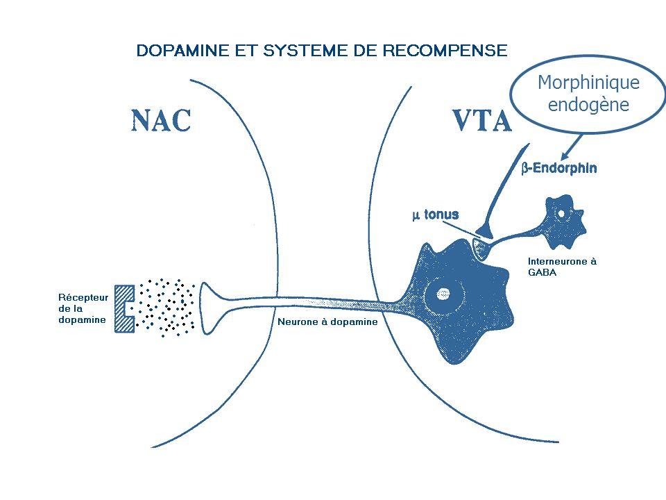 Morphinique endogène