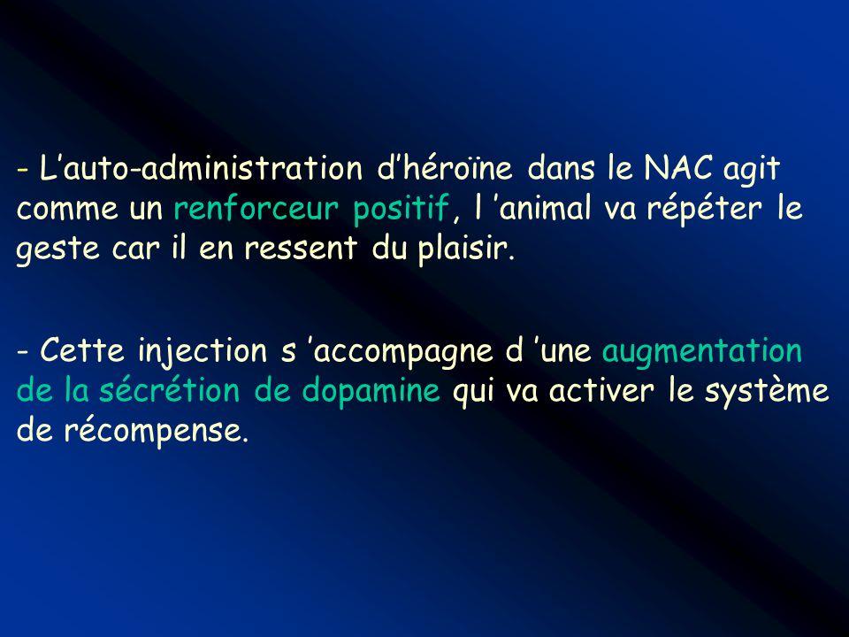 - Lauto-administration dhéroïne dans le NAC agit comme un renforceur positif, l animal va répéter le geste car il en ressent du plaisir. - Cette injec