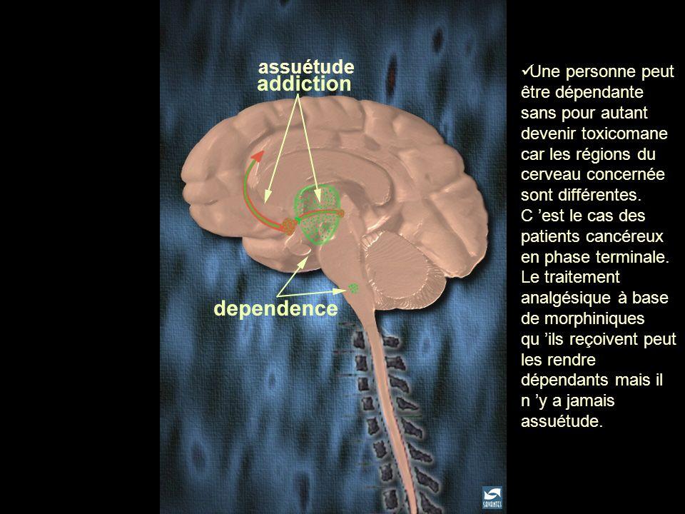 assuétude Une personne peut être dépendante sans pour autant devenir toxicomane car les régions du cerveau concernée sont différentes. C est le cas de