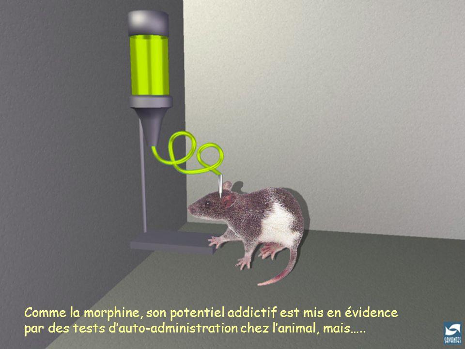 Comme la morphine, son potentiel addictif est mis en évidence par des tests dauto-administration chez lanimal, mais…..