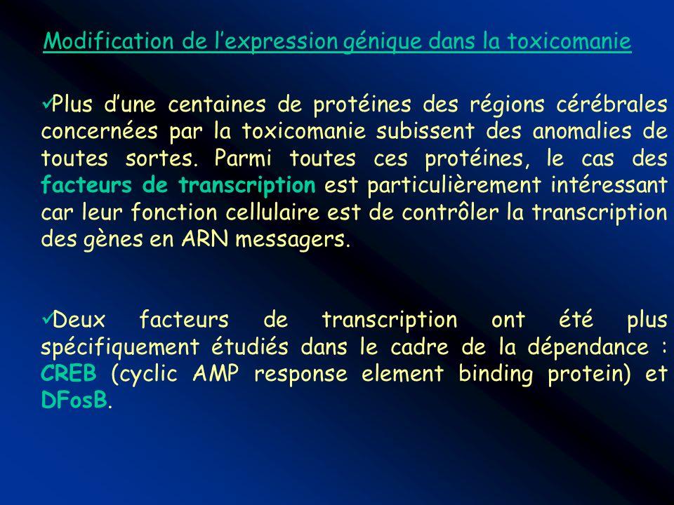 Modification de lexpression génique dans la toxicomanie Plus dune centaines de protéines des régions cérébrales concernées par la toxicomanie subissen