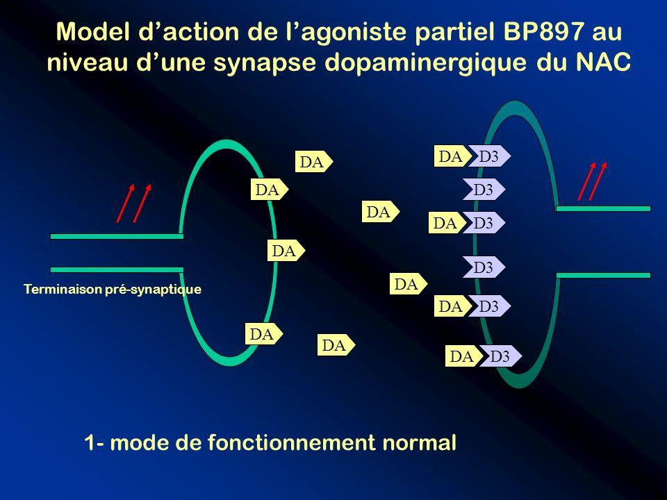 D3 Model daction de lagoniste partiel BP897 au niveau dune synapse dopaminergique du NAC D3 DA Terminaison pré-synaptique 1- mode de fonctionnement no