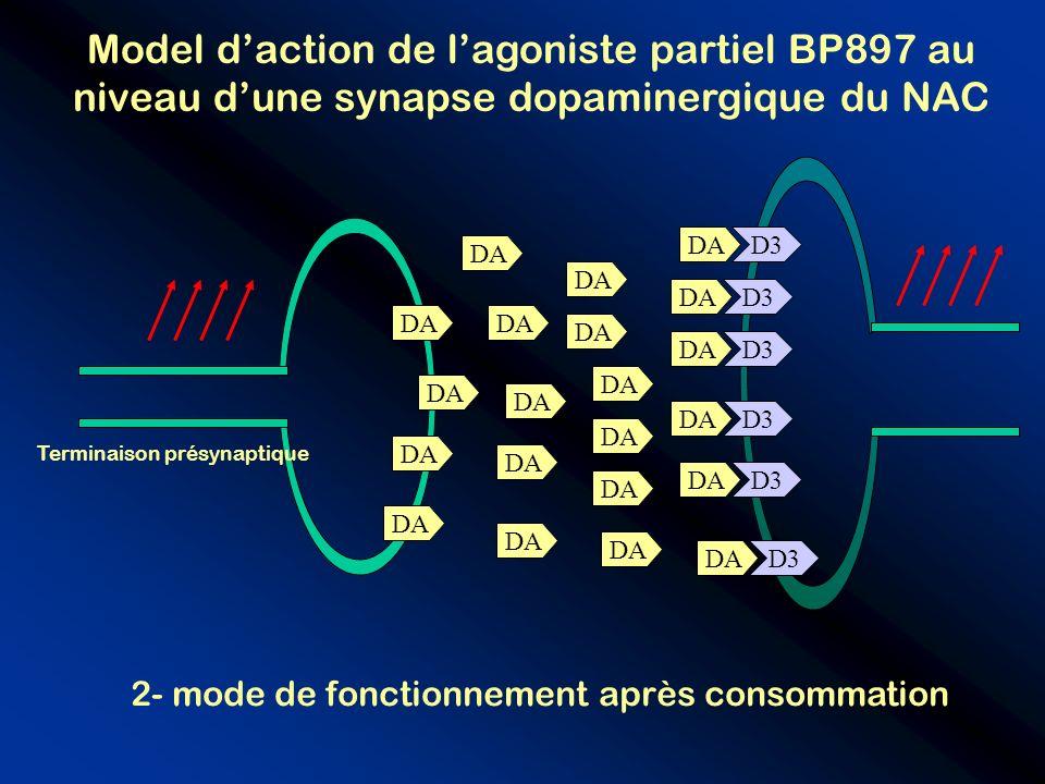 D3 Model daction de lagoniste partiel BP897 au niveau dune synapse dopaminergique du NAC D3 DA Terminaison présynaptique 2- mode de fonctionnement apr