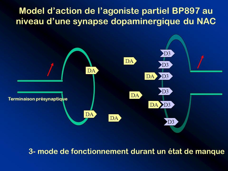D3 Model daction de lagoniste partiel BP897 au niveau dune synapse dopaminergique du NAC D3 DA Terminaison présynaptique 3- mode de fonctionnement dur