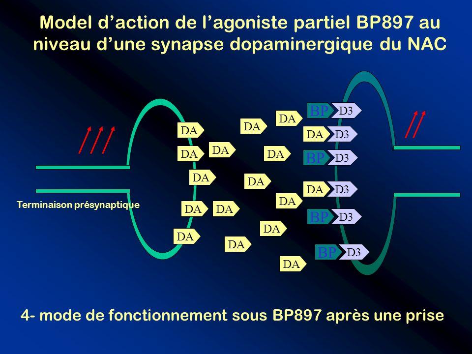 D3 BP DA BP D3 DA Terminaison présynaptique 4- mode de fonctionnement sous BP897 après une prise Model daction de lagoniste partiel BP897 au niveau du