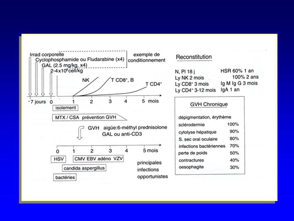 GREFFES DE MOELLE OSSEUSE –Conditionnement pré greffe du receveur receveur greffon greffon –Reconstitution hématologique en 2 à 5 semaines –Présence d