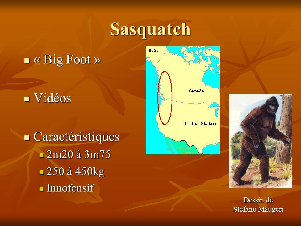 Sasquatch « Big Foot » « Big Foot » Vidéos Vidéos Caractéristiques Caractéristiques 2m20 à 3m75 2m20 à 3m75 250 à 450kg 250 à 450kg Innofensif Innofen