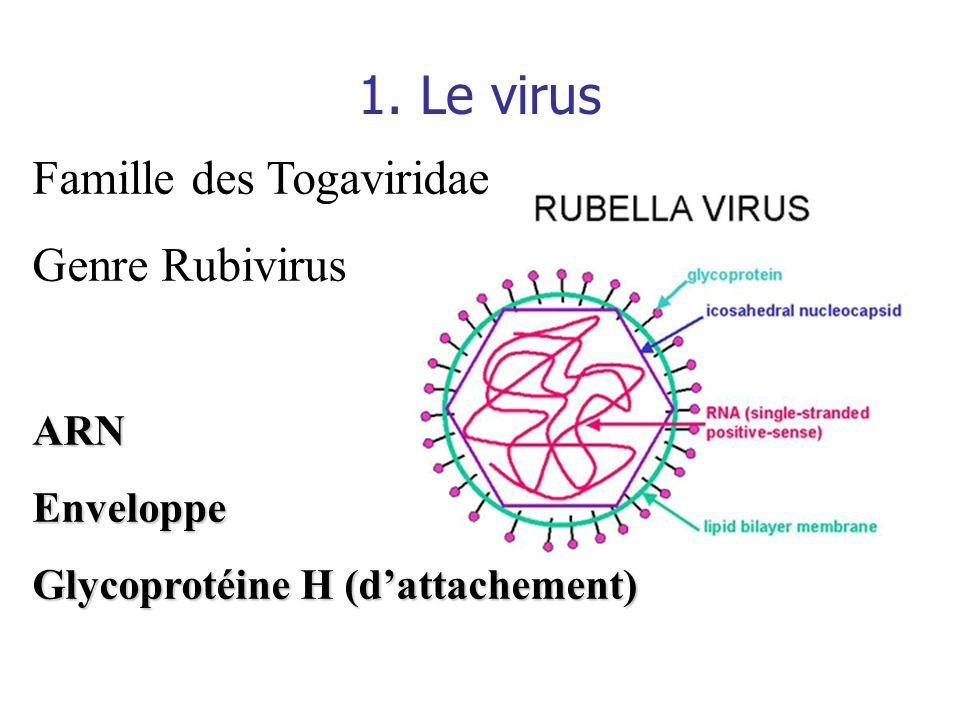 1. Le virus Famille des Togaviridae Genre RubivirusARNEnveloppe Glycoprotéine H (dattachement)