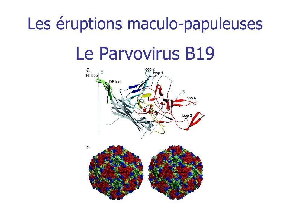 Le Parvovirus B19 Les éruptions maculo-papuleuses