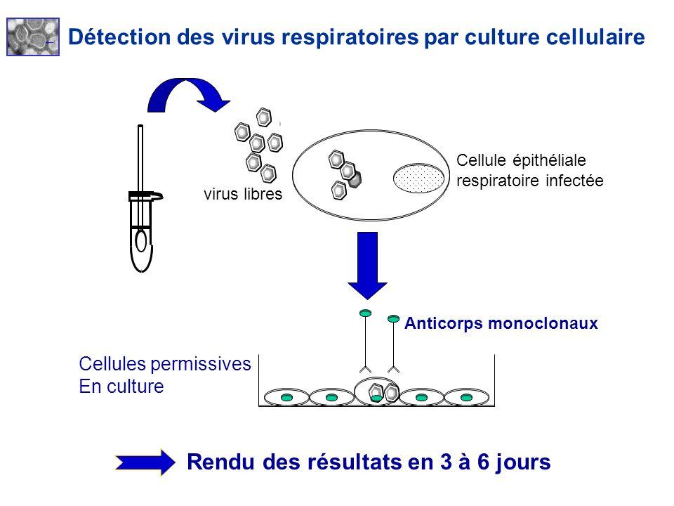 Rendu des résultats en 3 à 6 jours Cellules permissives En culture Anticorps monoclonaux Cellule épithéliale respiratoire infectée virus libres Détect