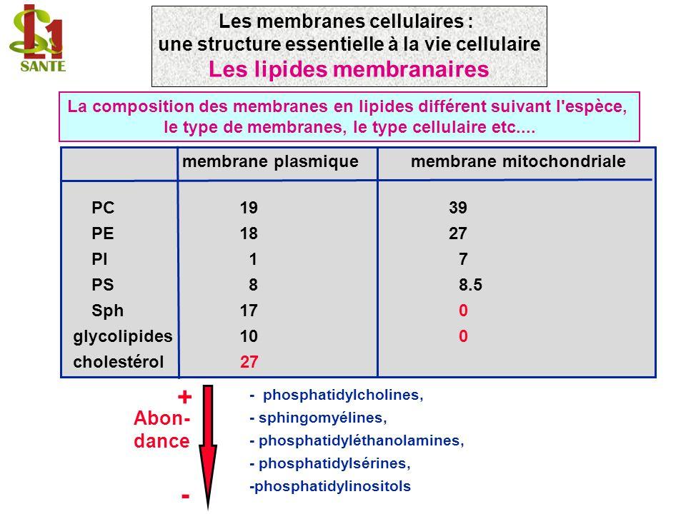 membrane plasmique membrane mitochondriale PC19 39 PE18 27 PI 1 7 PS 8 8.5 Sph17 0 glycolipides10 0 cholestérol 27 La composition des membranes en lipides différent suivant l espèce, le type de membranes, le type cellulaire etc....
