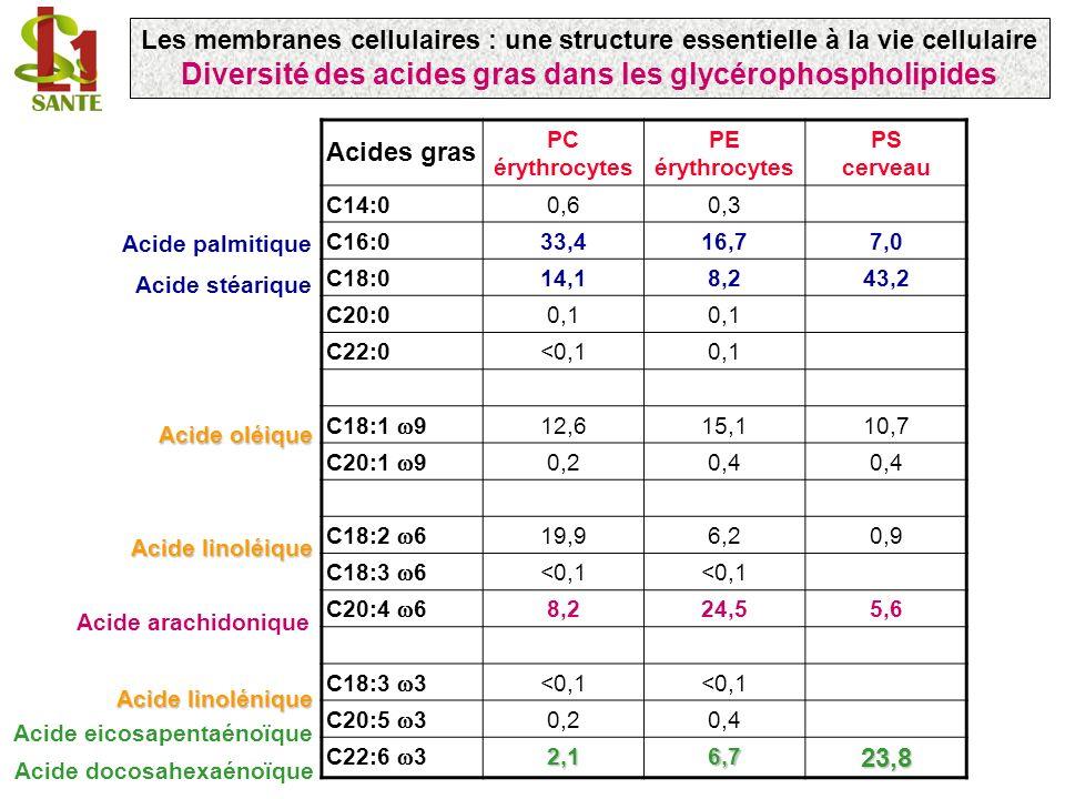 Acides gras PC érythrocytes PE érythrocytes PS cerveau C14:00,60,3 C16:033,416,77,0 C18:014,18,243,2 C20:00,1 C22:0<0,10,1 C18:1 9 12,615,110,7 C20:1 9 0,20,4 C18:2 6 19,96,20,9 C18:3 6 <0,1 C20:4 6 8,224,55,6 C18:3 3 <0,1 C20:5 3 0,20,4 C22:6 32,16,723,8 Acide oléique Acide linoléique Acide linolénique Acide arachidonique Acide docosahexaénoïque Acide eicosapentaénoïque Acide palmitique Acide stéarique Les membranes cellulaires : une structure essentielle à la vie cellulaire Diversité des acides gras dans les glycérophospholipides