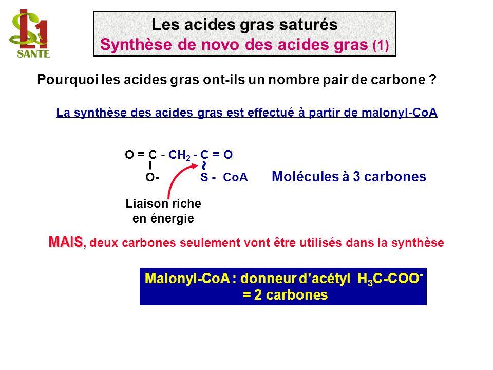 O = C - CH 2 - C = O O- S - CoA Malonyl-CoA : donneur dacétyl H 3 C-COO - = 2 carbones La synthèse des acides gras est effectué à partir de malonyl-Co