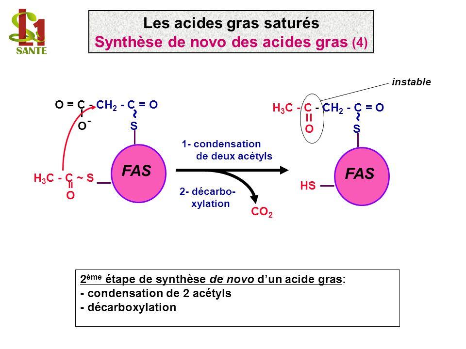 H 3 C - C ~ S O = FAS O = C - CH 2 - C = O O - S ~ 1- condensation de deux acétyls FAS H 3 C - C - CH 2 - C = O O S ~ HS instable 2 ème étape de synth