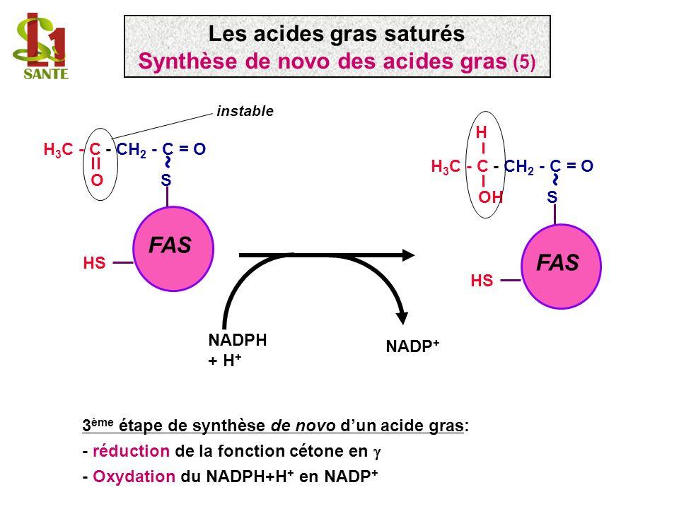 3 ème étape de synthèse de novo dun acide gras: - réduction de la fonction cétone en - Oxydation du NADPH+H + en NADP + FAS H 3 C - C - CH 2 - C = O O