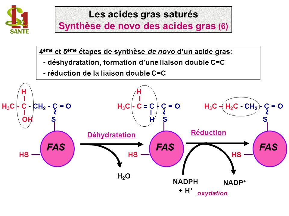 FAS H 3 C - C - CH 2 - C = O OH S ~ HS H 4 ème et 5 ème étapes de synthèse de novo dun acide gras: - déshydratation, formation dune liaison double C=C